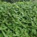 Formation plantes exotiques envahissantes / Nov. 2020