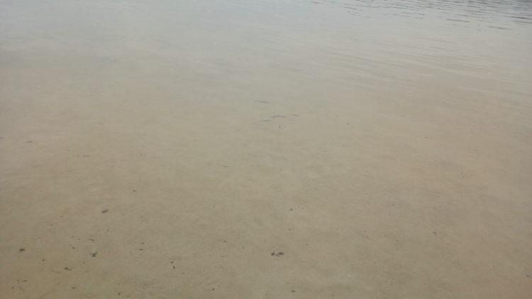 Levée de l'interdiction de baignade et de consommation des poissons au barrage du Drennec – juin 2019